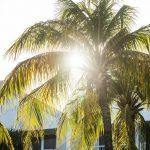 International Travel Palm Tree