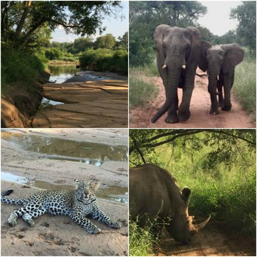 sabi sand, safari, animals