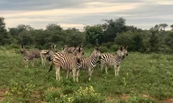 incentive trip, South Africa